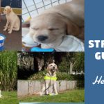 Sentinel Chosen Charity 2018/2019 – Guide dogs for the Blind